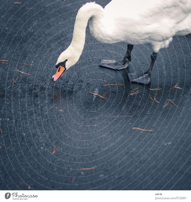Natur schön Blatt Tier Straße Traurigkeit Wege & Pfade Denken natürlich Vogel elegant Wildtier authentisch nass Beton einfach