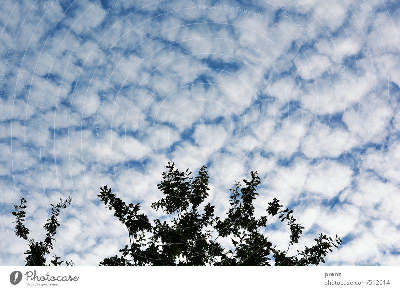 Herbsthimmel Himmel Natur blau weiß Wolken Umwelt Wetter Schönes Wetter Zweig Eiche
