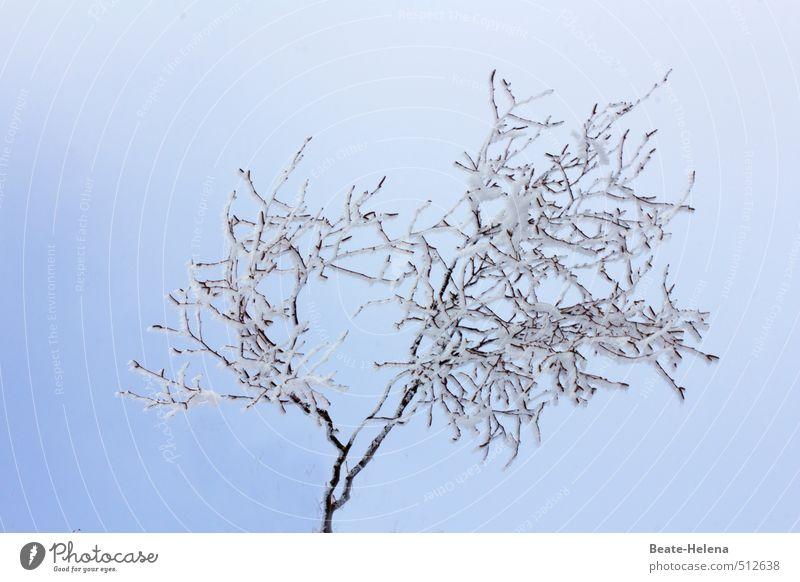 Winterstarre Schnee Berge u. Gebirge Natur Pflanze Himmel Wolkenloser Himmel Eis Frost Baum Park frieren leuchten warten ästhetisch exotisch Gesundheit kalt