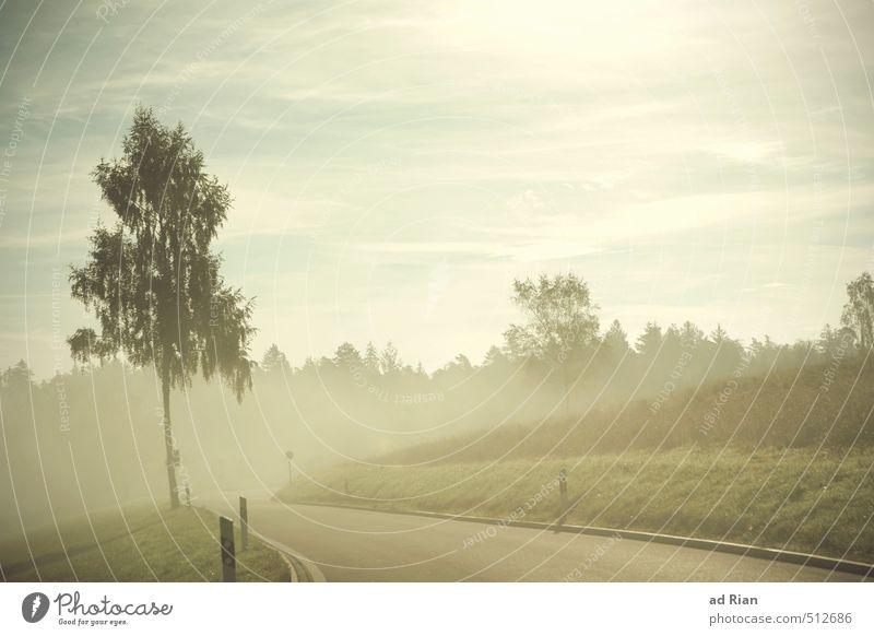 Nothing Comes To Nothing Umwelt Natur Landschaft Tier Himmel Wolken Horizont Sonne Herbst Schönes Wetter Nebel Baum Wiese Hügel Straße Wege & Pfade Stimmung