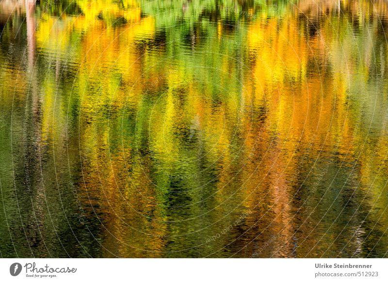 Bärensee 2013 | Herbstaquarell Natur schön grün Wasser Pflanze Baum Landschaft Wald gelb Umwelt Wärme Bewegung Schwimmen & Baden See natürlich