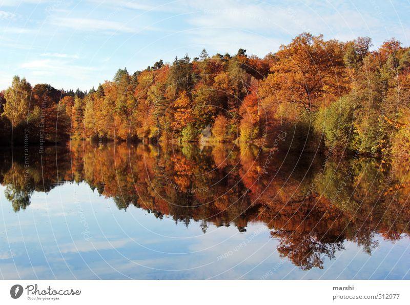 Bärensee 2013 | doppelt hält besser Natur Landschaft Wald Herbst Küste See Stimmung Schönes Wetter Seeufer herbstlich Spiegelbild