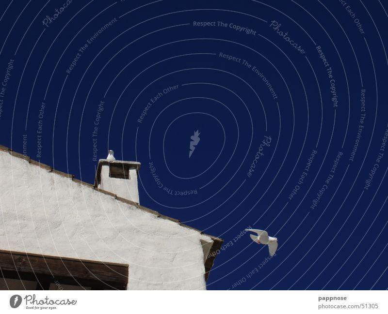 ein tag am meer - marbella Taube Haus Wand Vogel weiß Himmel blau fliegen Schornstein Schönes Wetter Kontrast Dach Freisteller Vor hellem Hintergrund