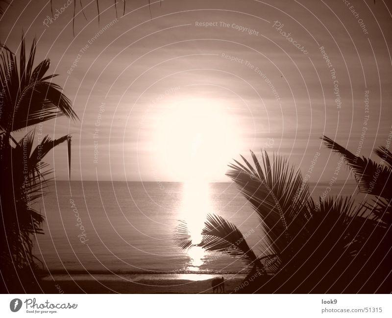 Sonnenuntergang Puerto Galera Wasser Meer Strand Insel Palme Abenddämmerung Philippinen Puerto Galera Marine Reserve