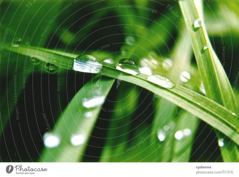Wassertropfen Halm Wiese Gras schön Regenwasser grün Makroaufnahme Nahaufnahme Natur Seil Detailaufnahme