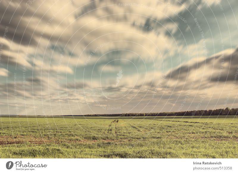 in Bewegung Natur Landschaft Erde Himmel Wolken Sommer Wetter Schönes Wetter Wind Wärme Gras schön weich blau grün Stimmung Warmherzigkeit Gelassenheit
