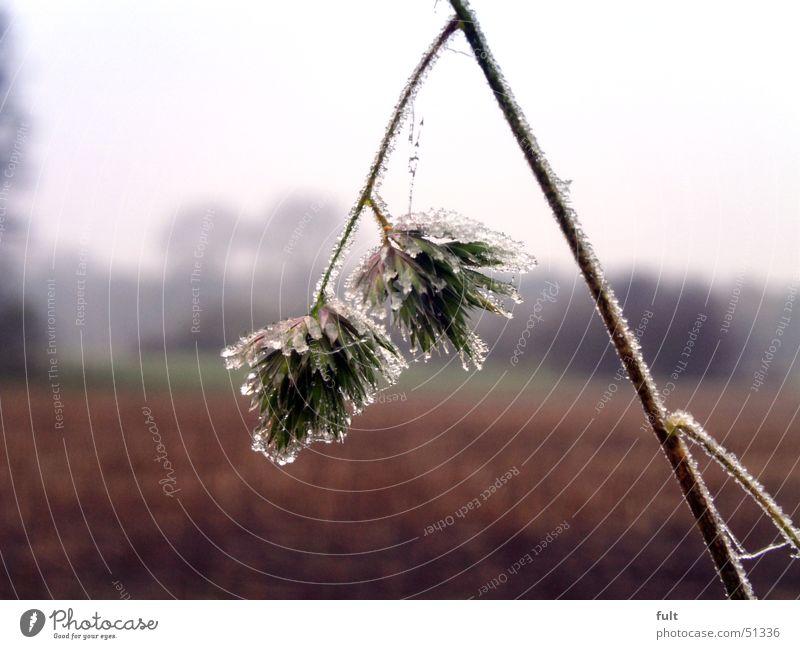ganz kalt Natur Blume Pflanze Winter Landschaft Eis Frost feucht
