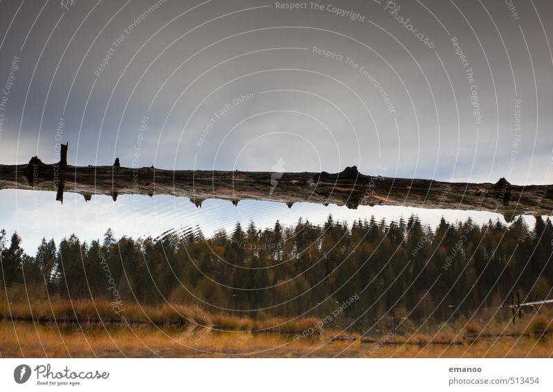 Wasserwald Ferien & Urlaub & Reisen Ausflug Berge u. Gebirge wandern Natur Landschaft Himmel Wolken Herbst Klima Wetter Pflanze Baum Wald nass Nadelwald