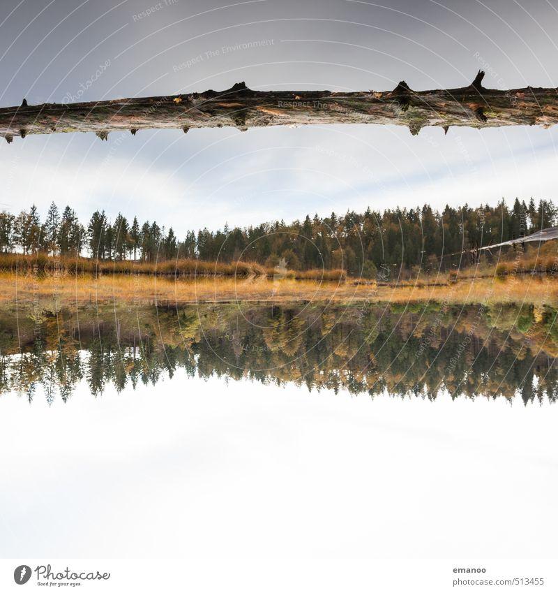 Nonnenmatttreibholz Ferien & Urlaub & Reisen Ferne Berge u. Gebirge wandern Natur Landschaft Wasser Himmel Pflanze Baum Wald Küste Seeufer Schwimmen & Baden