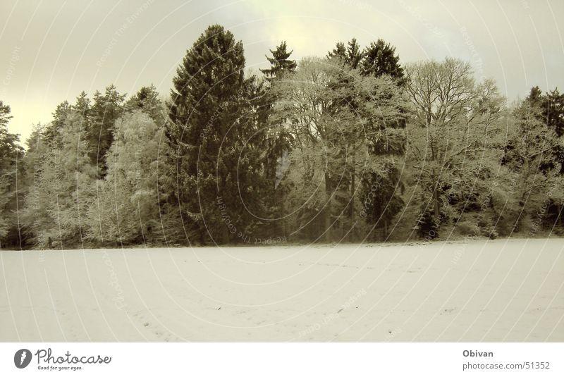 Winterwald Schnee Winterurlaub Natur Landschaft Pflanze Himmel Wolken Wetter schlechtes Wetter Baum Wald kalt trist grau schwarz weiß Tanne Dämmerung