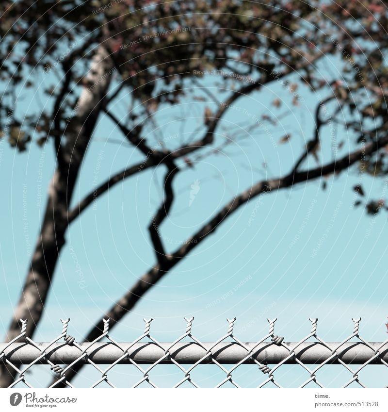 Sicherheitstrakt Umwelt Natur Himmel Schönes Wetter Baum Birke Park Zaun Maschendrahtzaun Metall Angst Entschlossenheit Genauigkeit Kontrolle Macht Netzwerk