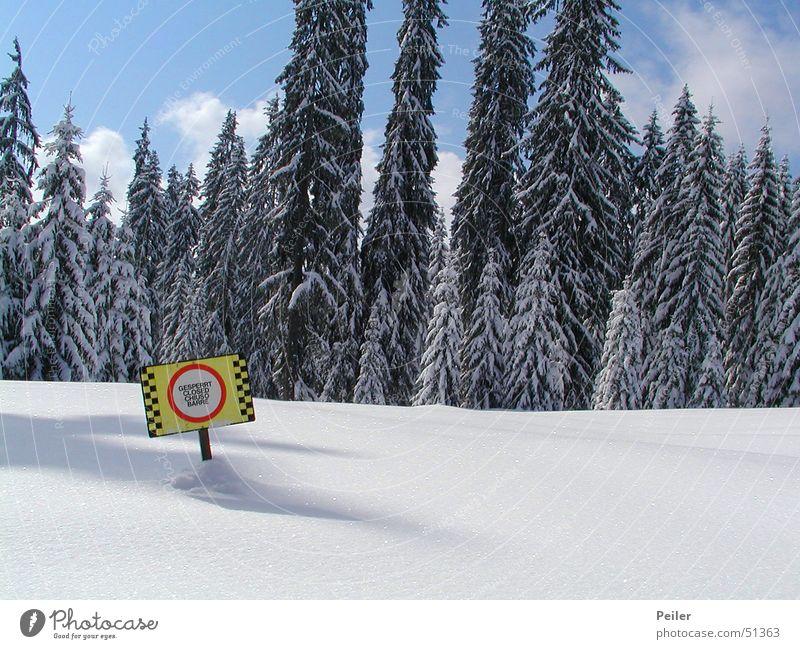 Gesperrte Skipiste II gesperrt Winter Wald Tanne Schneelandschaft Lawine Tiefschnee alpin hell-blau kalt Eiskristall gelb rot Schilder & Markierungen Schatten