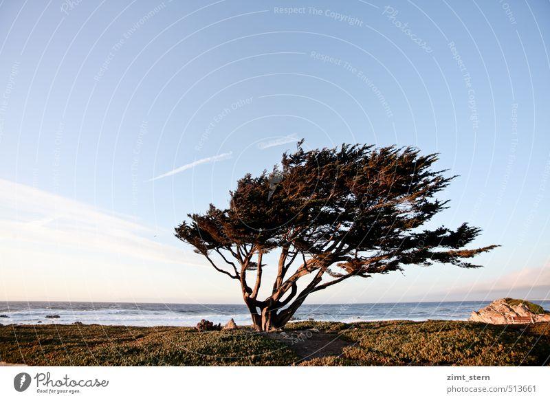 monterey tree Himmel blau grün Baum rot Erholung Einsamkeit Umwelt Küste Horizont braun Kraft Wind stehen Urelemente einzigartig