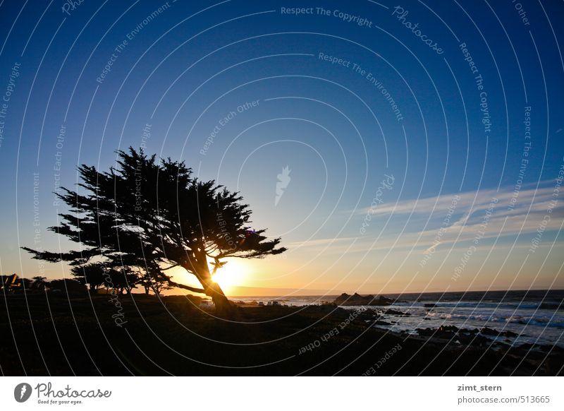 monterey sunset tree Natur blau Baum Meer Landschaft ruhig dunkel schwarz gelb Leben natürlich Küste Felsen Zufriedenheit Wellen gold