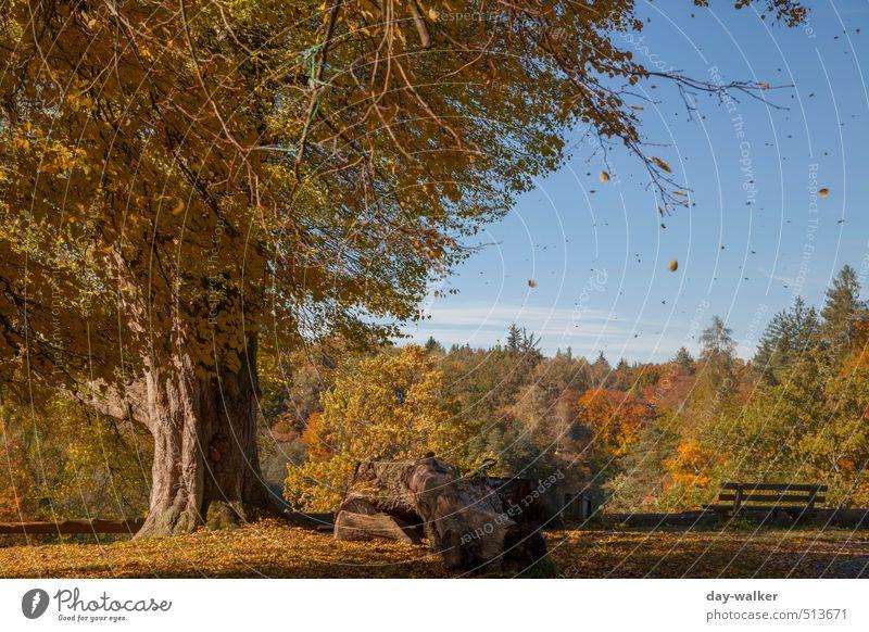Bärensee 2013 | Stürmischer Herbst Natur Landschaft Pflanze Himmel Wolken Schönes Wetter Wind Baum Gras Sträucher Park blau braun gelb gold orange Blatt