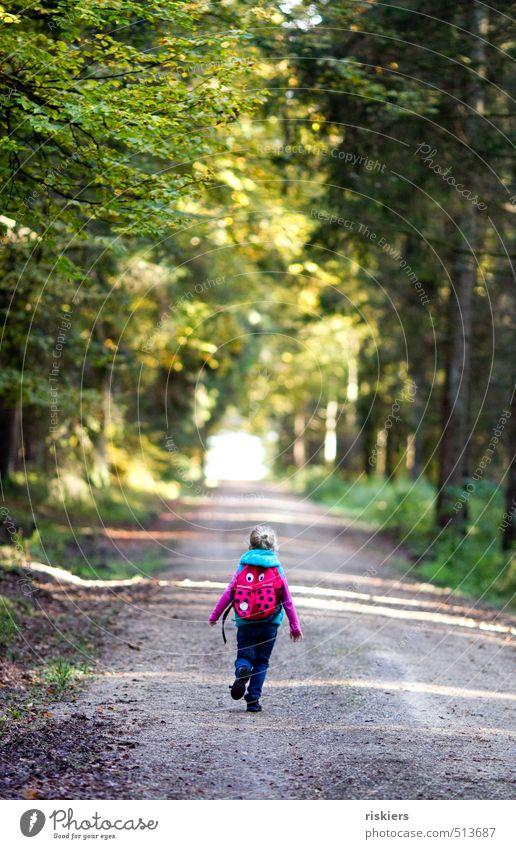 wanderlust Mensch feminin Kind Mädchen Kindheit 1 3-8 Jahre Umwelt Natur Landschaft Herbst Schönes Wetter Wald entdecken rennen wandern frei Freundlichkeit