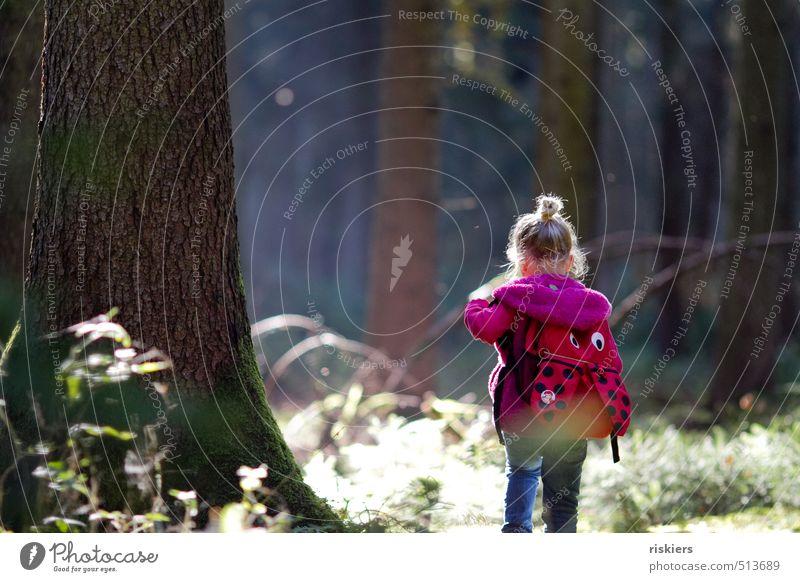waldkind Mensch Kind Natur Baum Erholung Landschaft ruhig Mädchen Wald Umwelt feminin Herbst natürlich gehen Kraft Kindheit