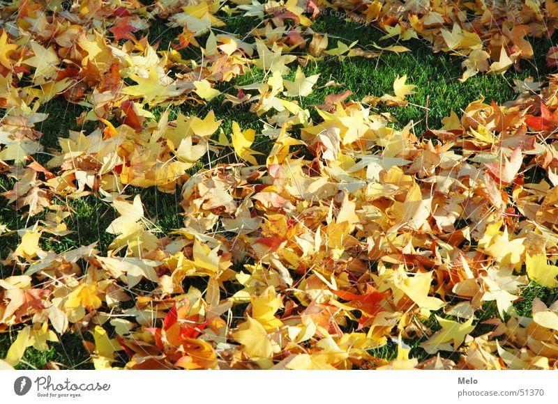 autumn grün rot Blatt gelb Herbst Gras orange
