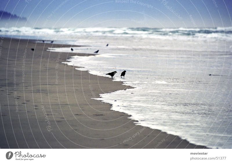 blackbirds Wasser Meer Strand Sand Vogel Nebel Rabenvögel Oregon Cannon Beach