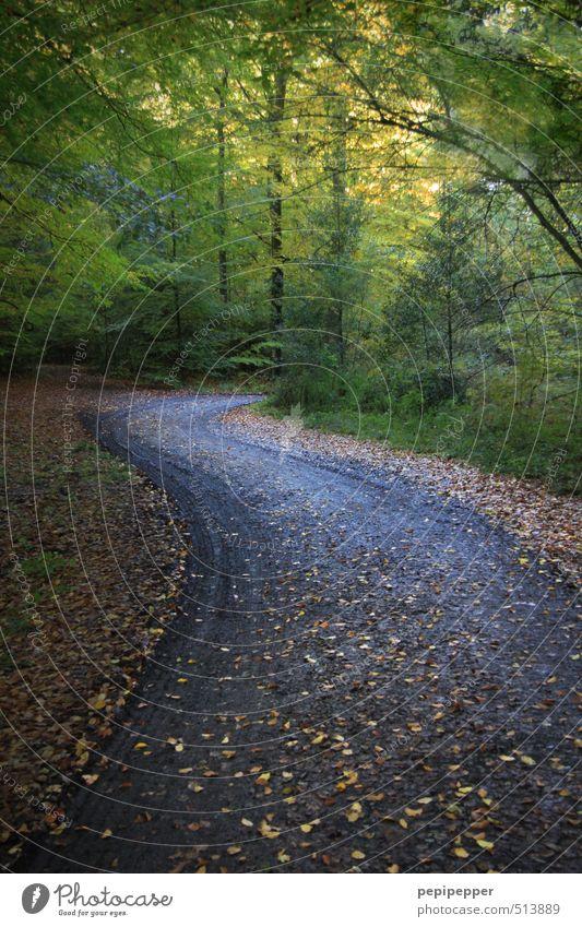 (weg)gehen Ausflug wandern Natur Landschaft Erde Herbst Wetter Schönes Wetter Wind Pflanze Baum Sträucher Blatt Wald Wege & Pfade dunkel grün Angst