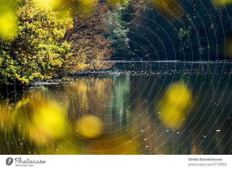 Bärensee 2013 | Herbstspots Umwelt Natur Landschaft Pflanze Wasser Schönes Wetter Baum Sträucher Blatt Wald Seeufer leuchten verblüht nass natürlich schön Wärme