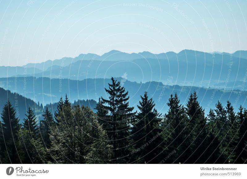 Bregenzer Spitzen Himmel Natur blau Pflanze Sommer Baum Landschaft ruhig Ferne Wald Umwelt Berge u. Gebirge liegen Luft Nebel wandern