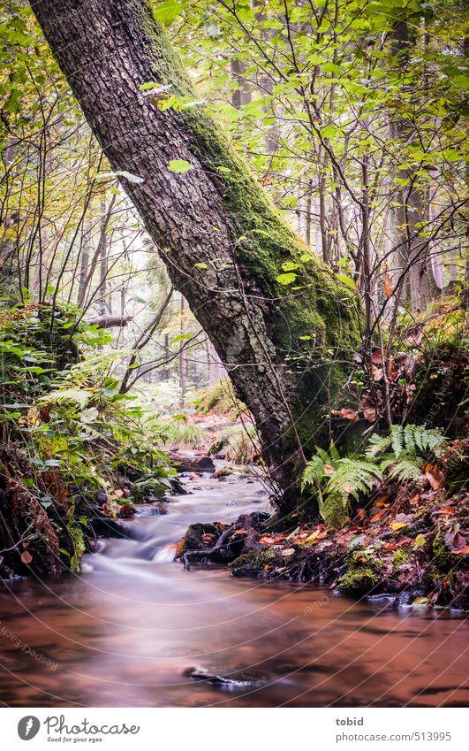 Black Forrest Natur Ferien & Urlaub & Reisen grün Wasser Pflanze Sommer Baum Einsamkeit Blatt Wald Umwelt Bewegung Herbst natürlich wandern Sträucher