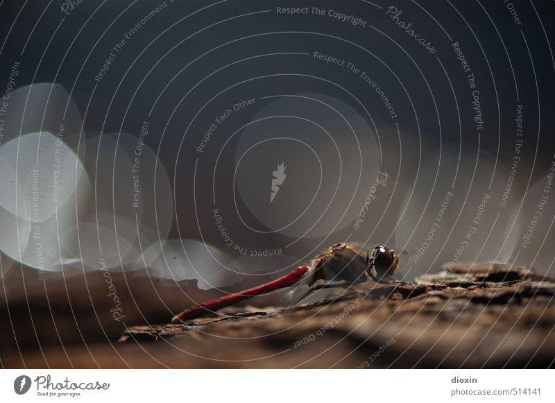 Lake Bears 2013 | Moonlight Drive Umwelt Natur Sonnenlicht Tier Wildtier Libelle Insekt sitzen klein natürlich Farbfoto Makroaufnahme Menschenleer