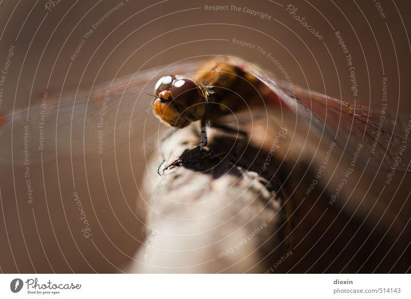 Lake Bears 2013 | Waiting For The Sun Umwelt Natur Sonnenlicht Ast Tier Wildtier Flügel Insekt Libelle Libellenflügel Facettenauge hocken sitzen klein natürlich