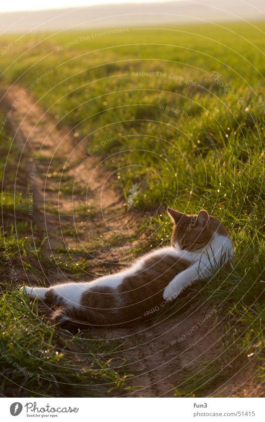 Katze grün Feld Reinigen