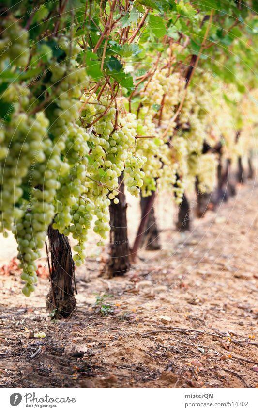 French Style XV Kunst ästhetisch Zufriedenheit Wein Weinberg Weintrauben Weinbau Weinlese Weingut Ernte grün Frankreich Farbfoto Gedeckte Farben Außenaufnahme