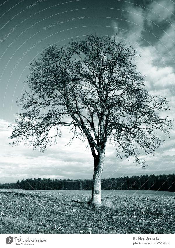 Naked Tree Natur Baum Wolken Einsamkeit Landschaft Feld