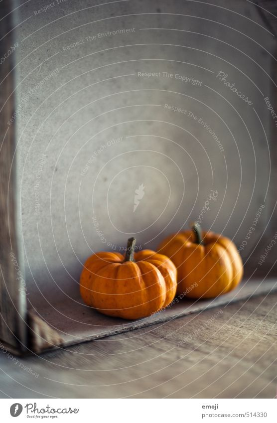 Kürbis Herbst natürlich orange Ernährung Gemüse Kürbis Saison Kürbisgewächse Kürbiszeit