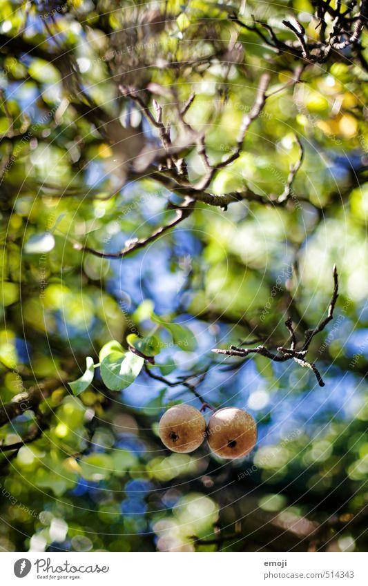 Birnenherbst Natur Pflanze Baum Tier Umwelt Herbst natürlich Gesundheit Frucht frisch