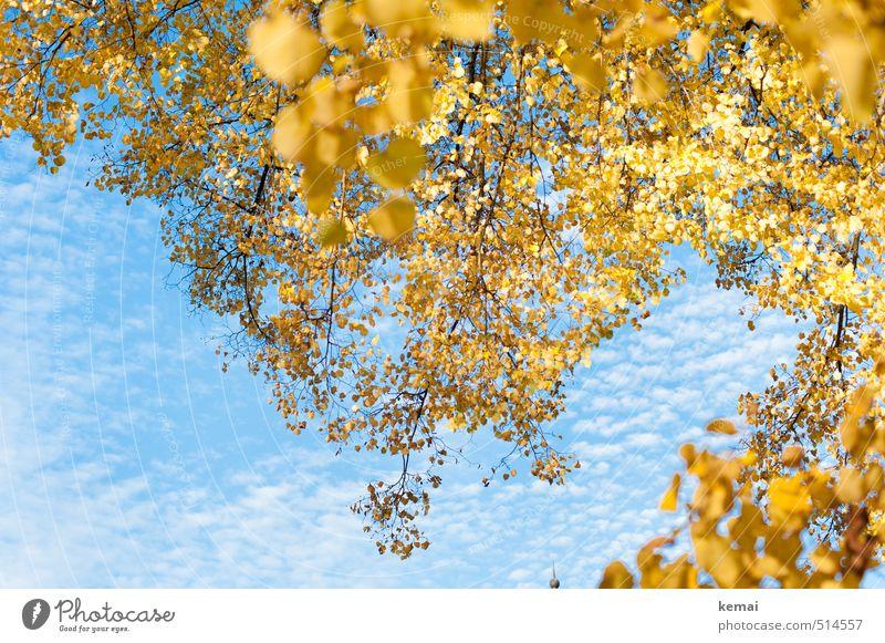 Bärensee 2013 | güldenblauweiß Umwelt Natur Pflanze Himmel Wolken Herbst Schönes Wetter Baum Blatt Grünpflanze Birke Birkenblätter Zweig Ast Park hängen