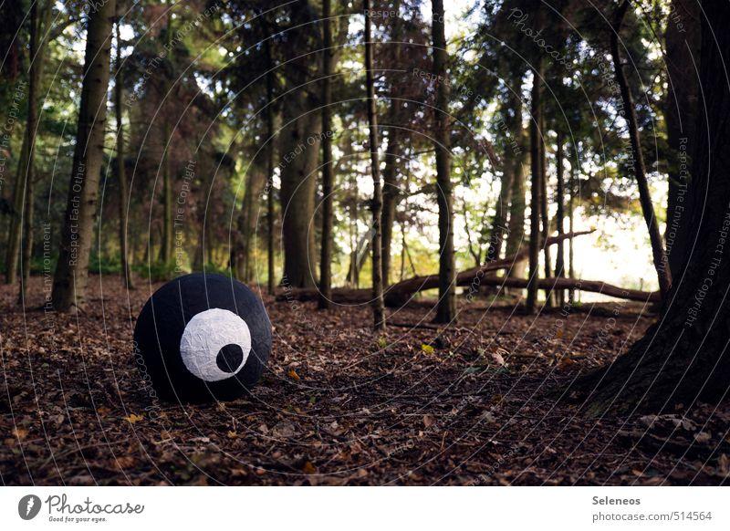 darauf sollte man mal ein Auge werfen Natur Baum Wald Umwelt beobachten Wachsamkeit Überwachung