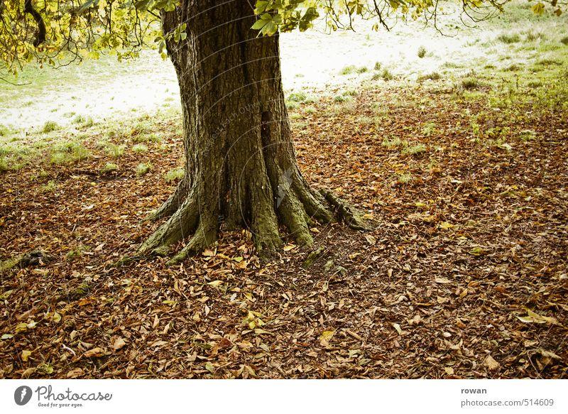 herbstbaum Umwelt Natur Landschaft Baum Blatt Garten Park Wiese trist Herbst herbstlich Herbstlaub fallen Jahreszeiten Baumstamm Traurigkeit Farbfoto