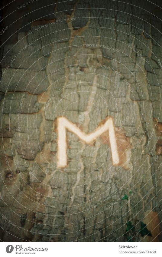 Das einzigartige M Natur Baum Blatt Einsamkeit dunkel Holz hell Buchstaben Käfer anonym Baumrinde Laubbaum Lateinisches Alphabet Bedeutung schnitzen