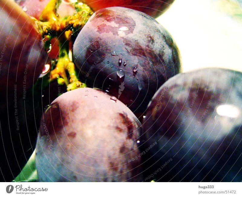 vitis vinifera Weintrauben rund lecker Wassertropfen feucht nass frisch Dessert Gesundheit vine blau Frucht blue round fruit grape Makroaufnahme waterdrop prall