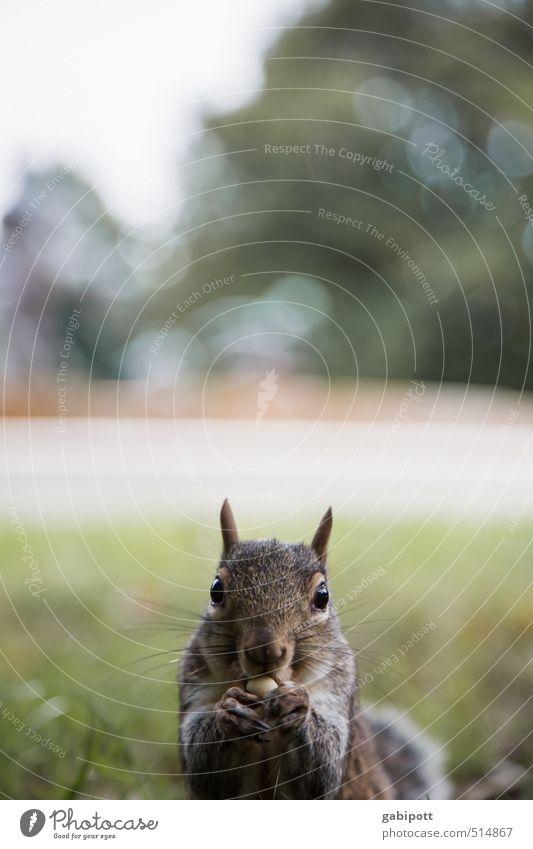 Zeitumstellung | mir egal Umwelt Natur Pflanze Tier Schönes Wetter Eichhörnchen beobachten Essen Freundlichkeit Fröhlichkeit kuschlig Neugier niedlich