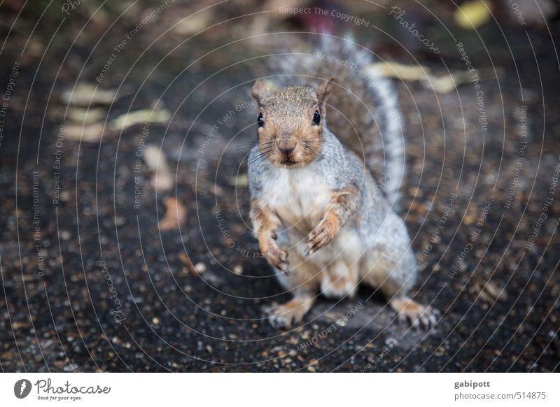 hattu noch ne Nuss? Kind Natur Tier Leben natürlich Wildtier Fröhlichkeit niedlich beobachten Freundlichkeit Neugier Wunsch frech Eichhörnchen füttern