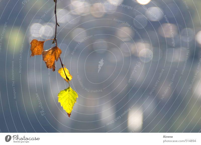 verklärter Herbst Natur blau Wasser Pflanze Baum Landschaft Blatt Herbst Küste See natürlich braun orange glänzend gold leuchten