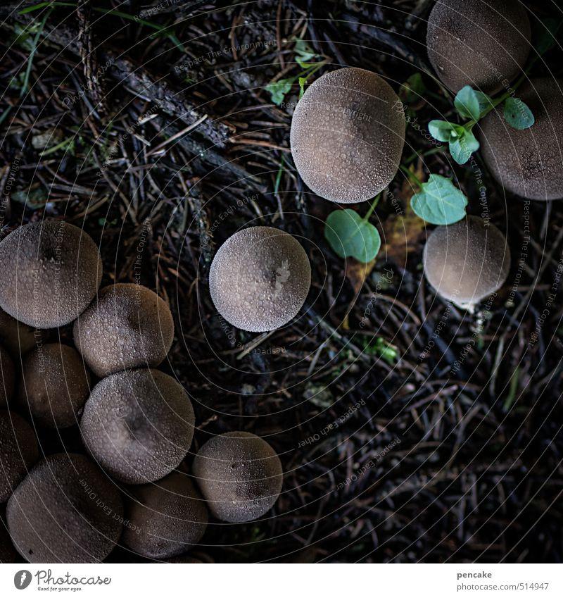 die siedler II Natur Wald Herbst natürlich braun dreckig Erde Erfolg Urelemente einzigartig Zeichen frech Pilz Aggression Bovisten