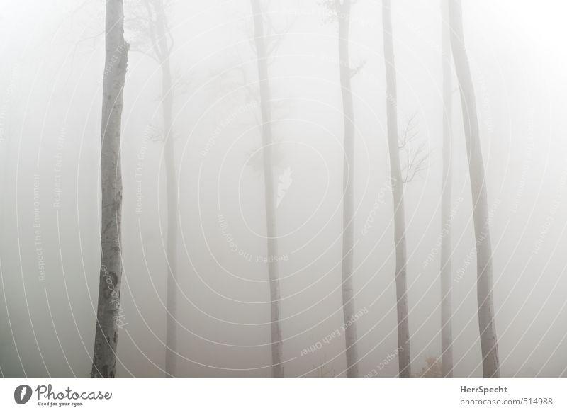l l l llll Umwelt Natur Landschaft Pflanze Herbst schlechtes Wetter Nebel Baum Grünpflanze Wald außergewöhnlich bedrohlich gruselig kalt natürlich trist braun
