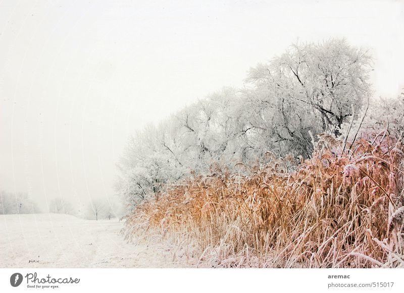 Eiskalt Natur Pflanze Baum Landschaft ruhig Winter Wiese Schnee Gras grau Stimmung Sträucher Frost Flussufer