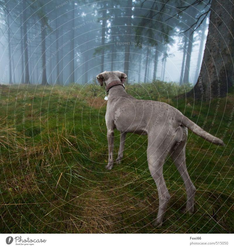 immer schön aufpassen Hund grün Baum Freude Tier Wald gelb dunkel kalt feminin Bewegung Herbst Gras Spielen braun Nebel
