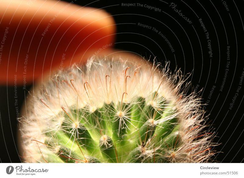 Die Natur im Detail Natur Pflanze schwarz Linse Kaktus Lupe Stachel