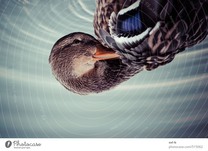Natur Wasser ruhig Tier Herbst natürlich Vogel Wildtier nass Feder Flügel Freundlichkeit Fluss Wellness Gelassenheit nah