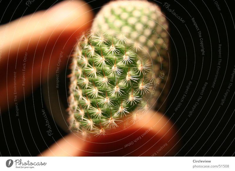 Meinen Kaktus unter der Linse Natur Pflanze schwarz Finger Lupe Stachel Zimmerpflanze