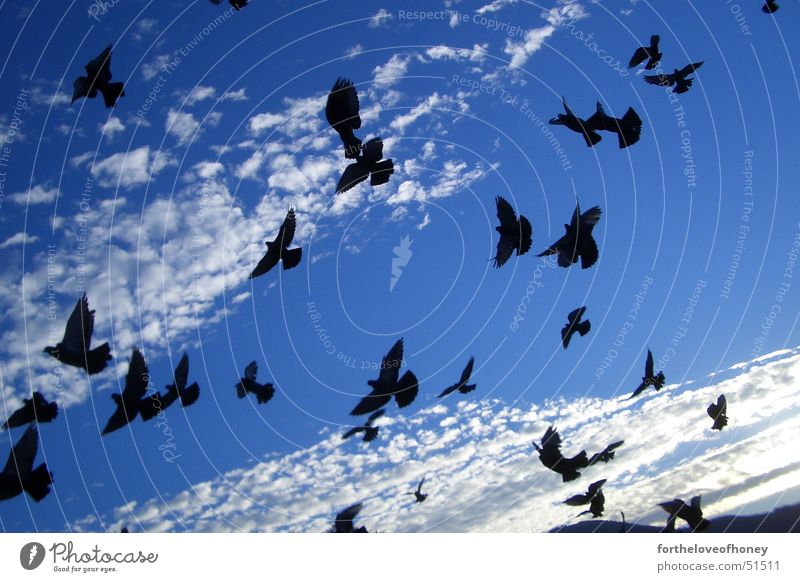 morning birds Vogel Wolken Taube Himmel clouds Salzburg doves